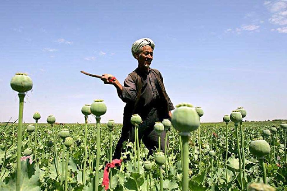 http://02varvara.files.wordpress.com/2008/05/poppy-field-in-afghanistan.jpg