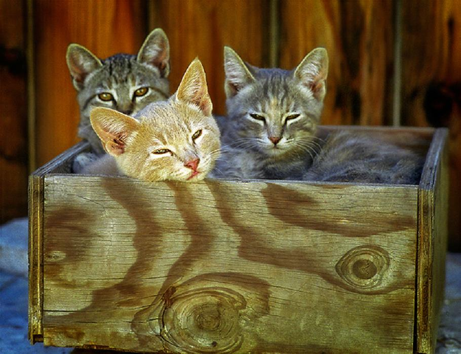 three-little-kittens