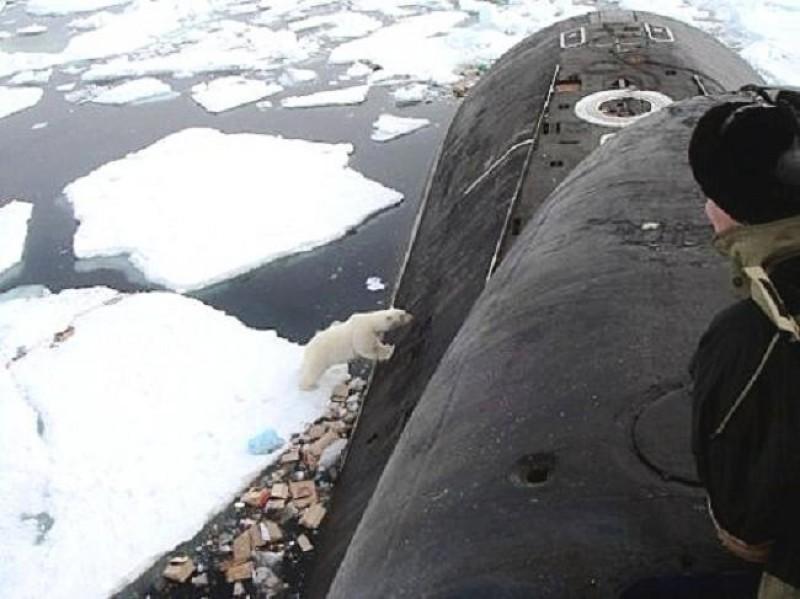Bears Submarine Polar Bear And Submarine