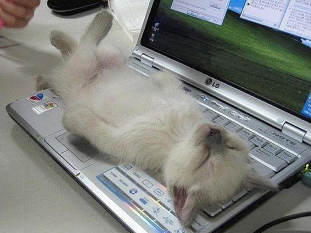 sleeping-cat4
