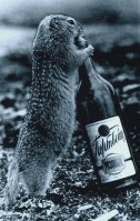 woodchuck and bottle