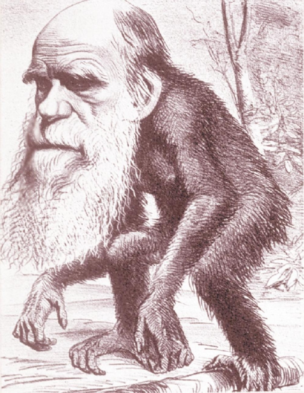 Darwin monkey cartoon