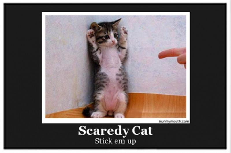 01 Scaredy Cat