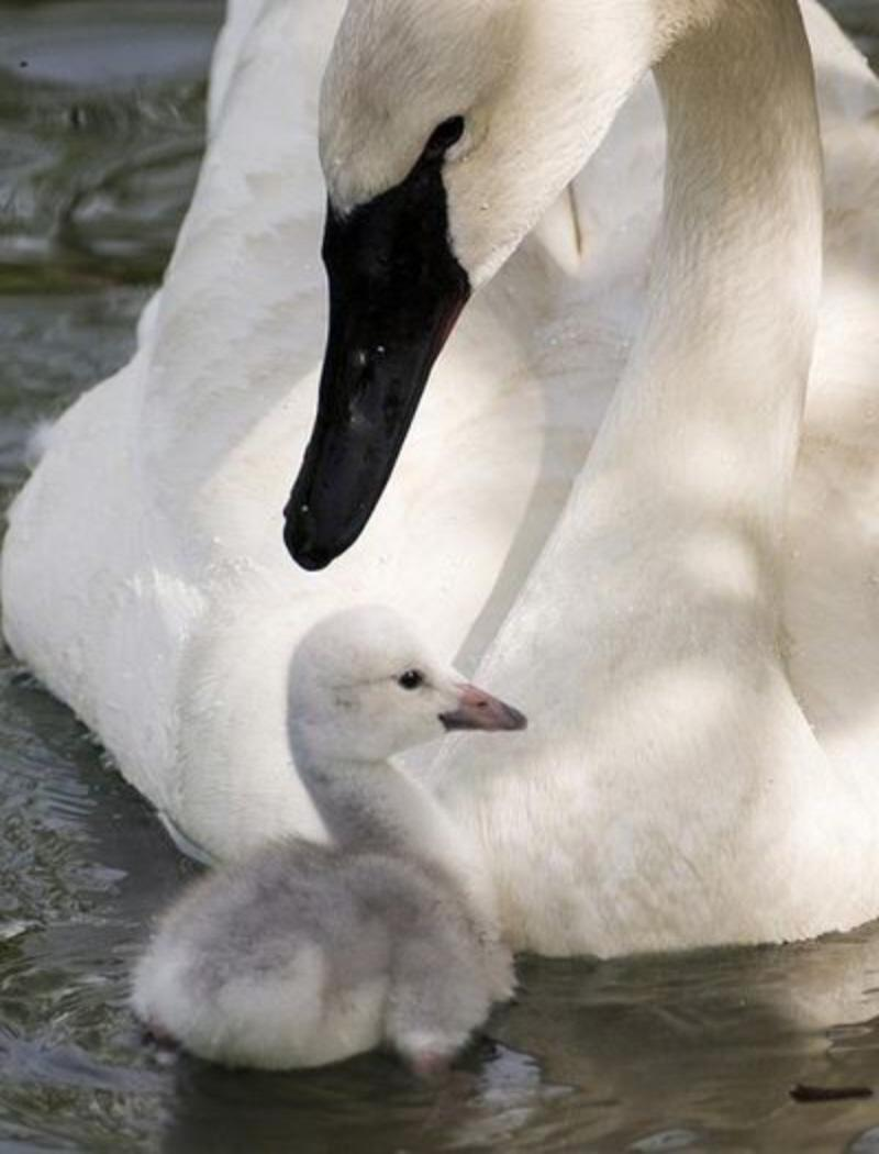 Photo Essay. The Animals Love Their Children… What About Us ...