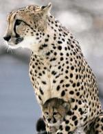 a15-animal-mothers
