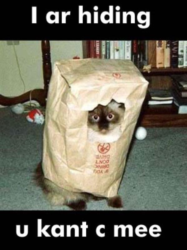 01 cat I ar hiding cat in a bag