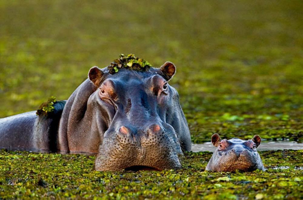 1. В книге Мои любимые семьи животных вы увидите лучшие фотографии
