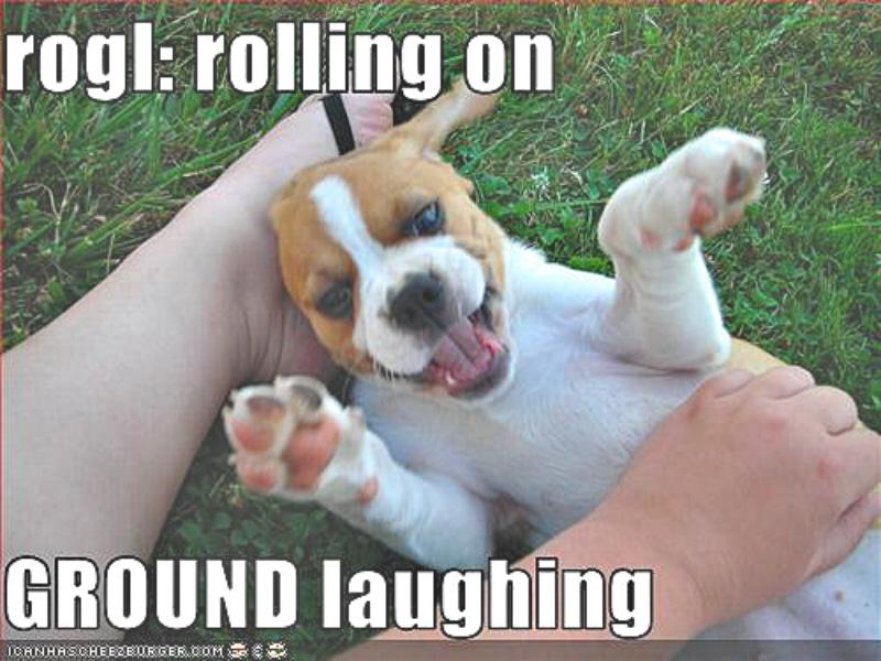 Puppy rolling on the ground laughing