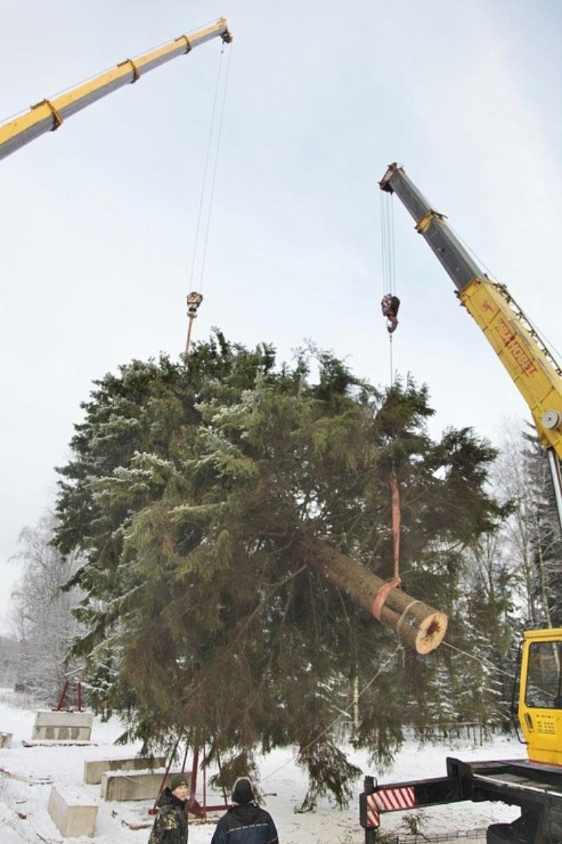 01o Cutting Down the Kremlin Xmas Tree 2010