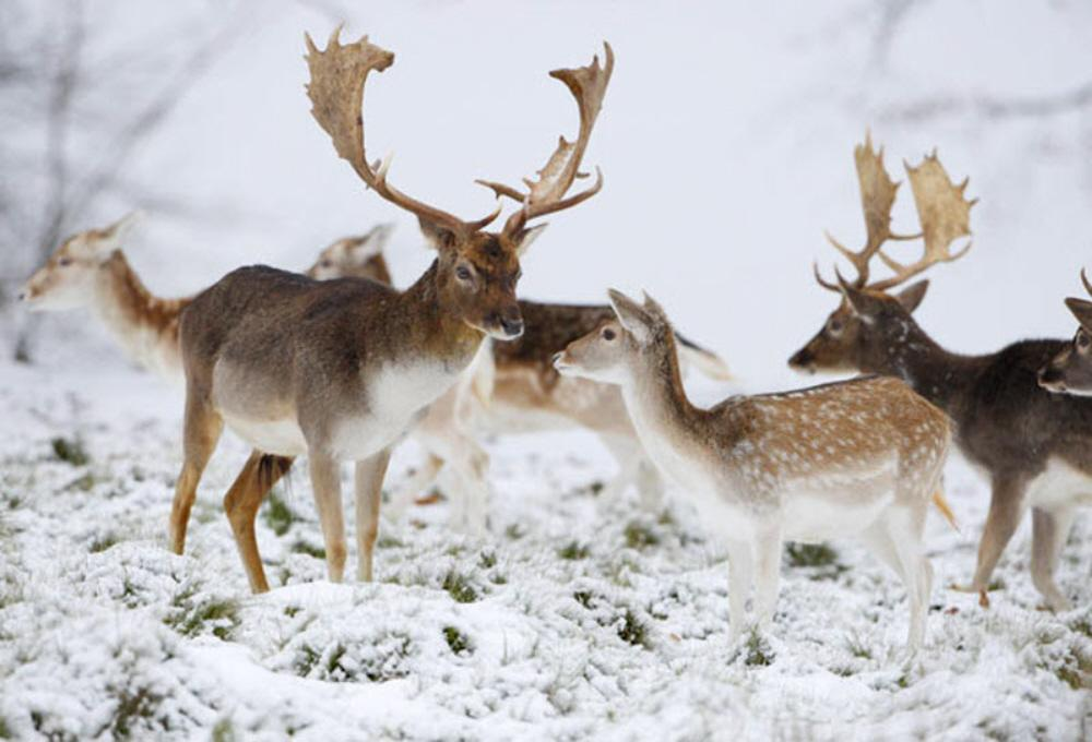 Animals In Winter Oges Student Resource Pages