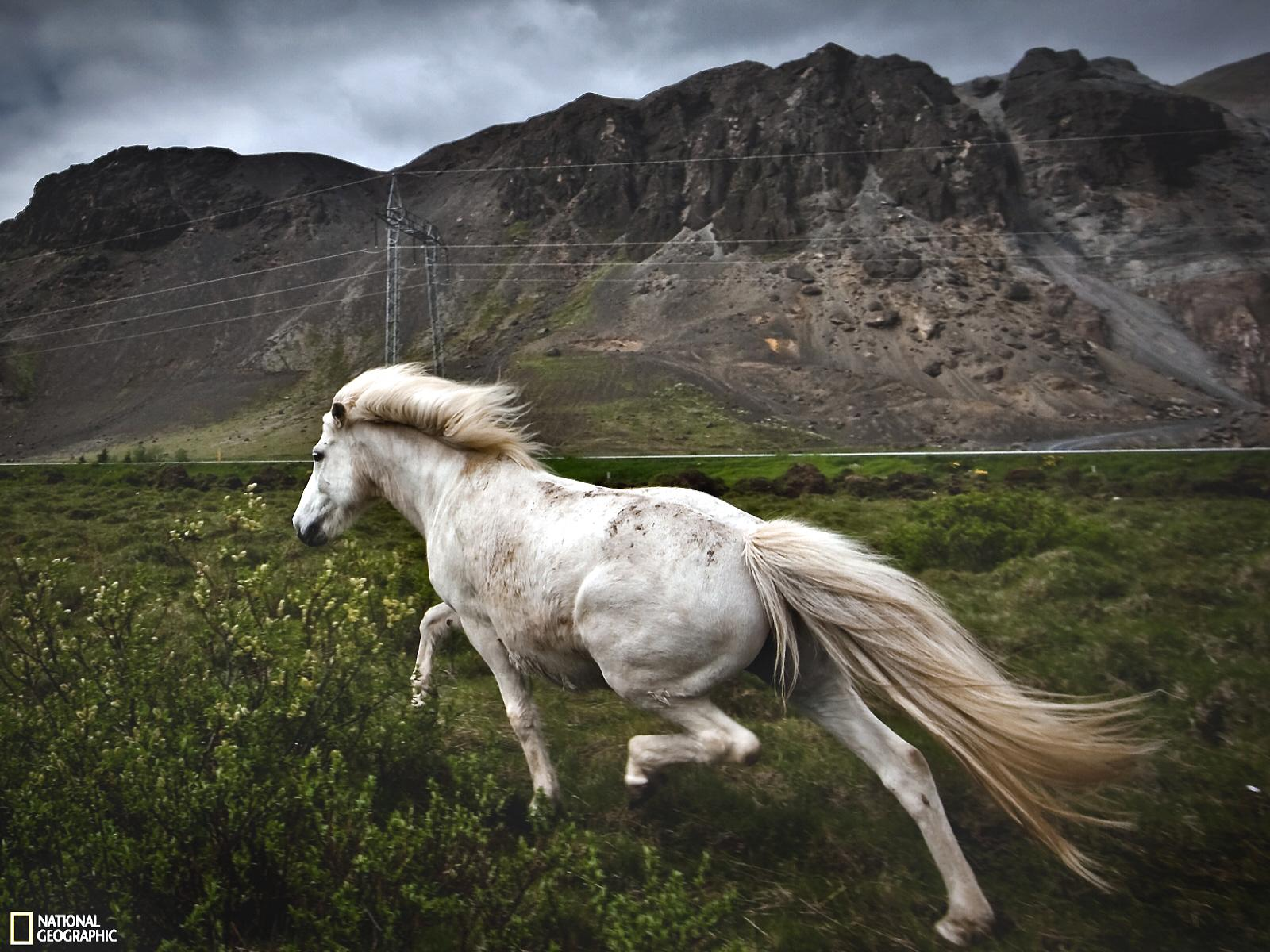 Great Wallpaper Horse National Geographic - 05x-smaller-brothers-28-02-11  Gallery_604334.jpg?w\u003d1600\u0026h\u003d1200
