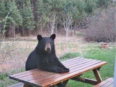 01 bear at table