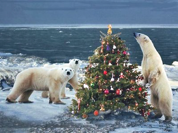 01 Christmas polar bears | Voices from Russia