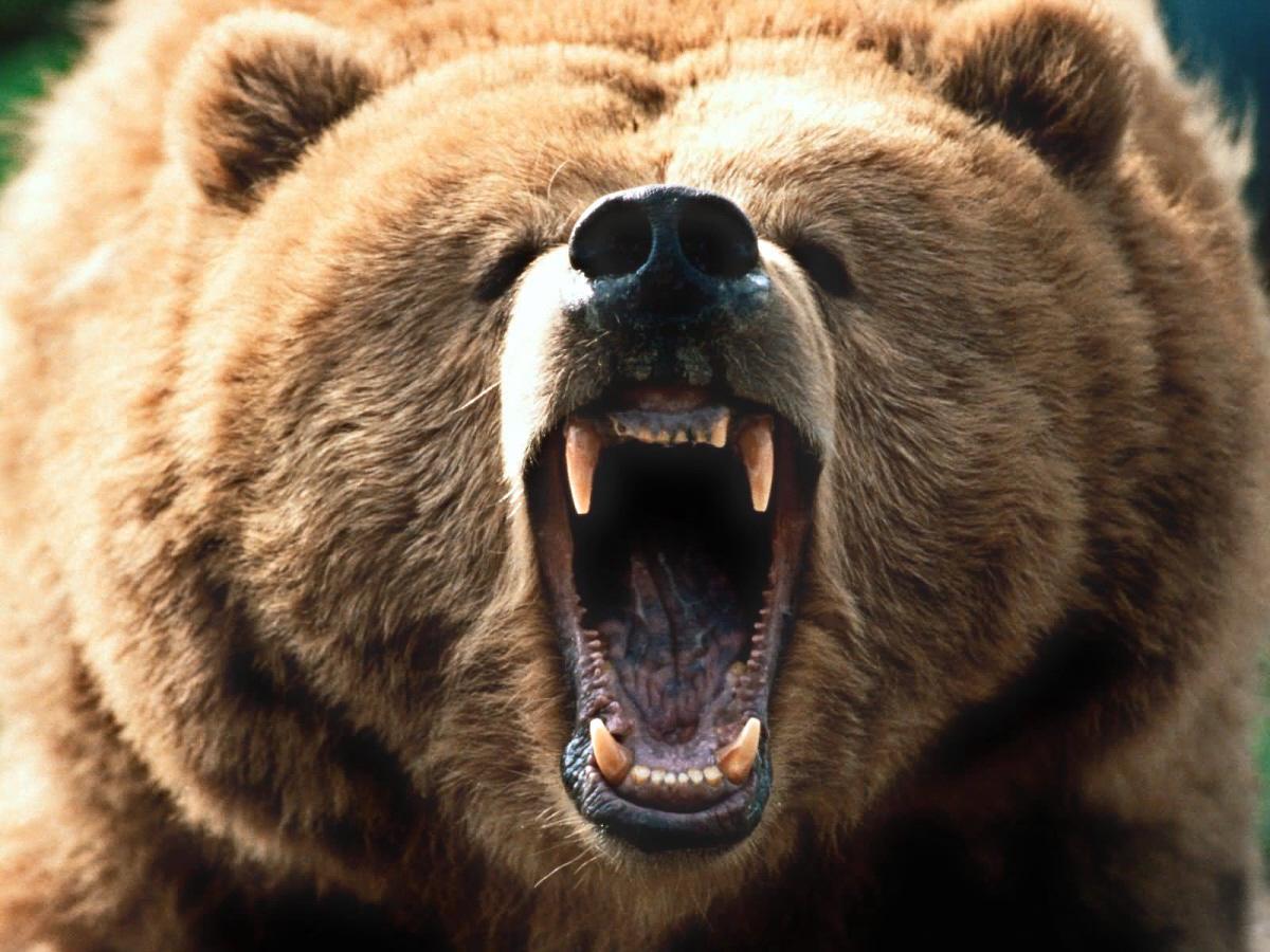 big bear essay