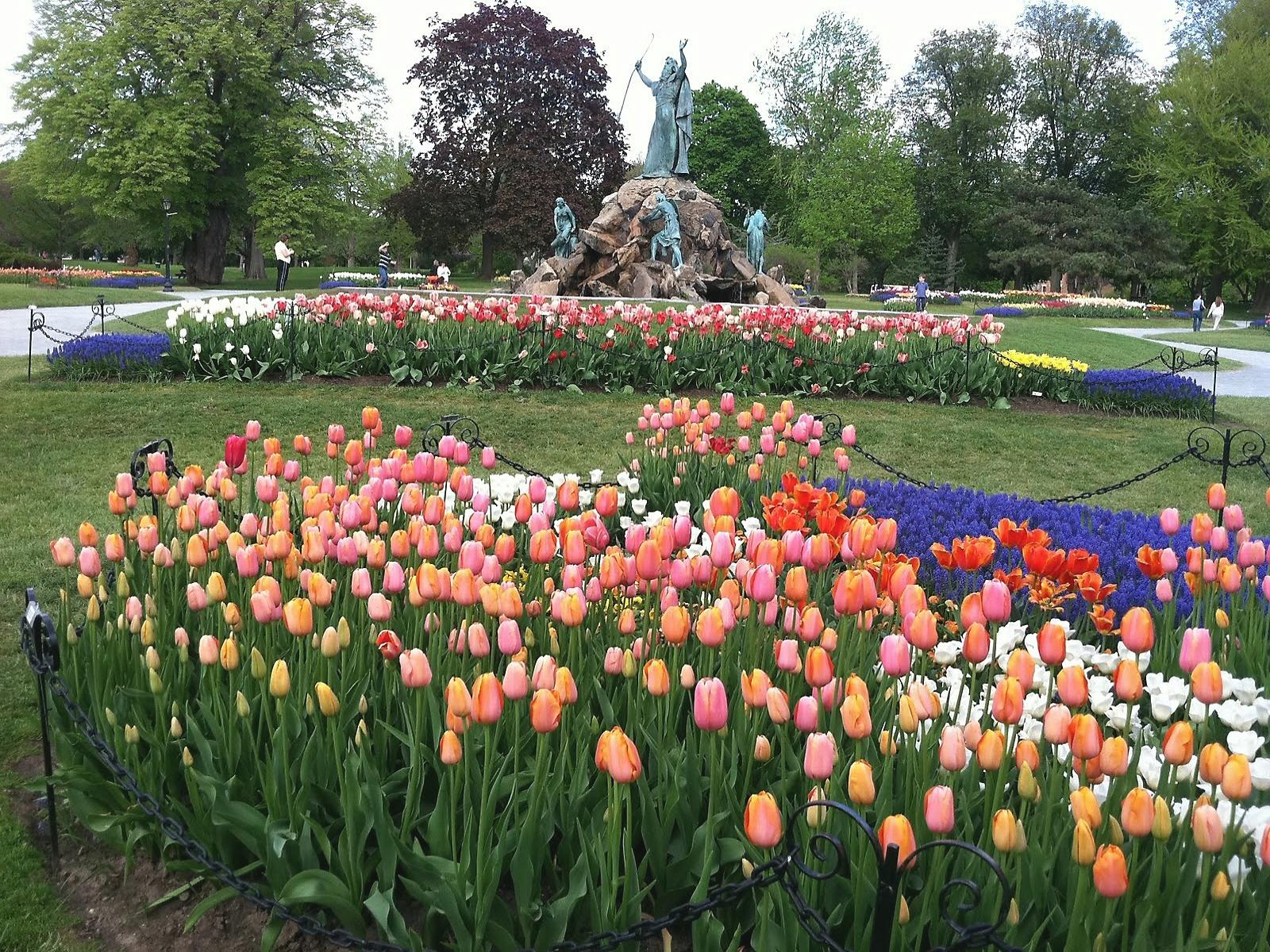 01 Albany Tulip Fest