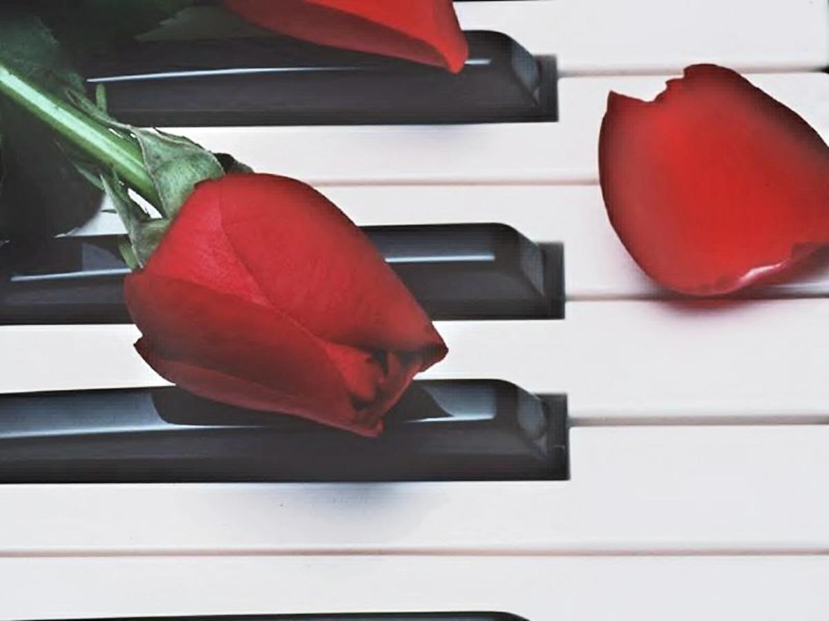 01 melancholy music red rose