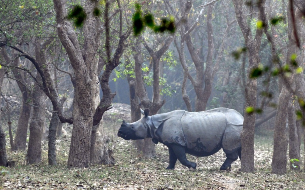 00.001c 24.03.12 RIA animal news rhino