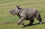 00.001i 24.03.12 RIA animal news rhino