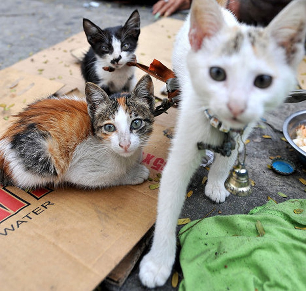 march  ria novosti presents  march  international cat day facts  figures  cats voices  russia