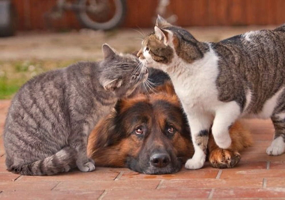 … they get along like cats n' dogs 00 1c dog and cat 10 08 12