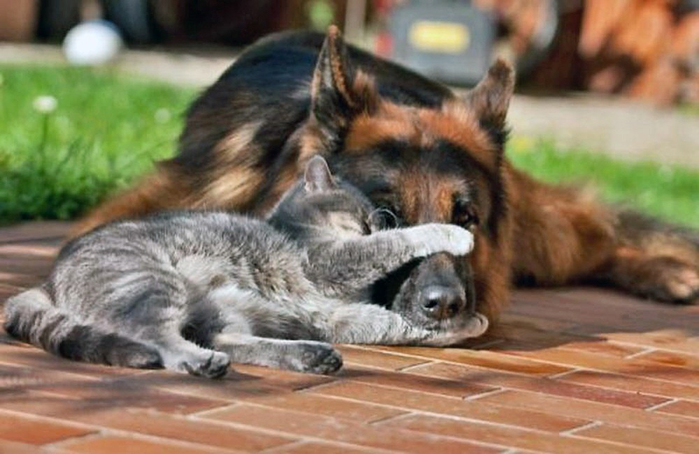 … they get along like cats n' dogs 00 1d dog and cat 10 08 12