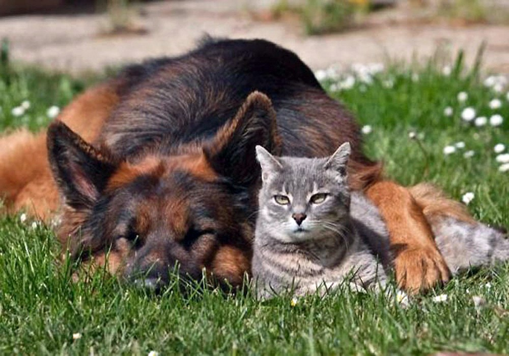00.1e dog and cat. 10.08.12