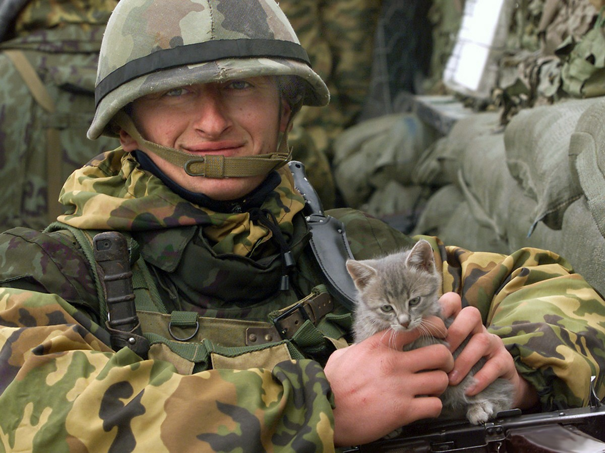 slide show essay on the cats of war Heart-warming and disarming, the war that saved my life, is a must read nine-year-old ada escapes from the suffocating control of her mother, and embarks on an exciting yet dangerous journey set against the background of the world war ii.
