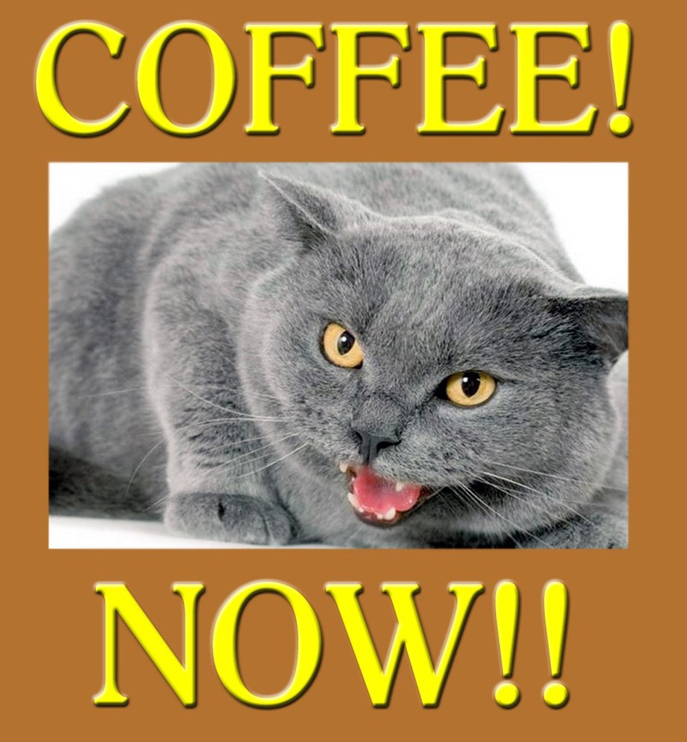 00 Grey Cat. 23.09.12. Coffee... NOW.