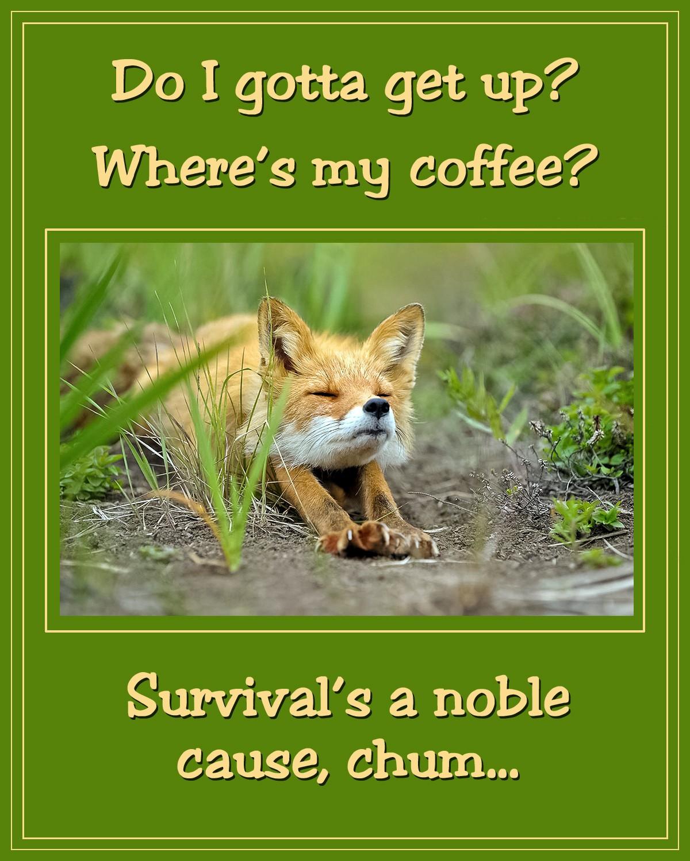 00 Do I Gotta Get Up. Where's My Coffee. 31.10.12