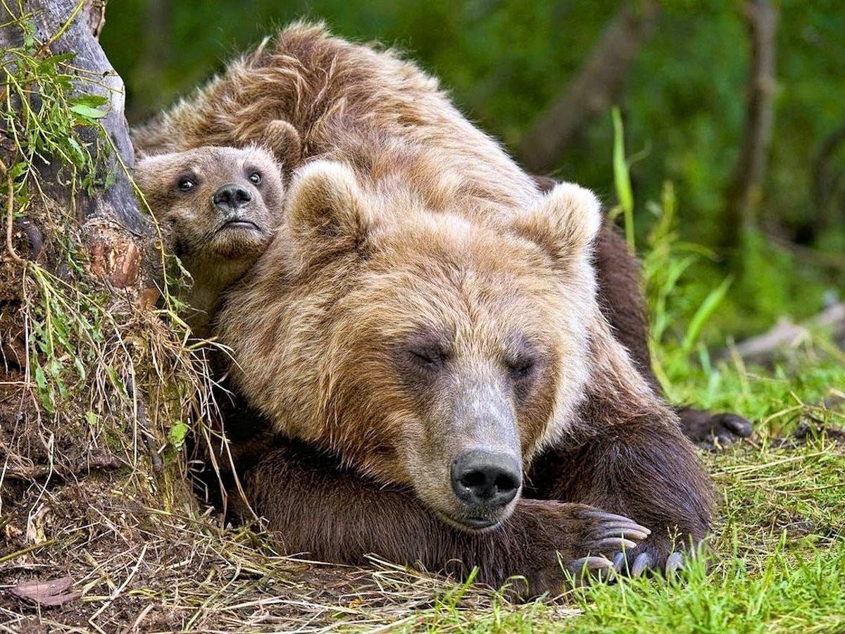 bears - photo #24