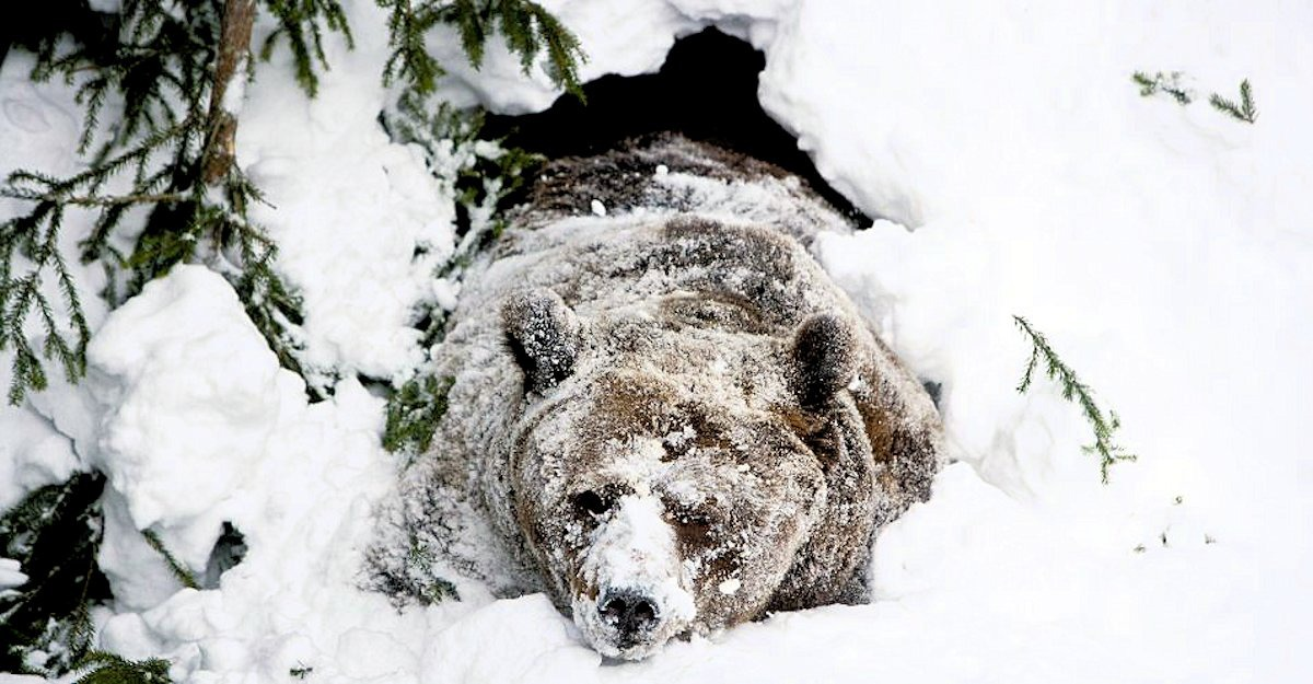 00 Bear in Winter. 14.12.12