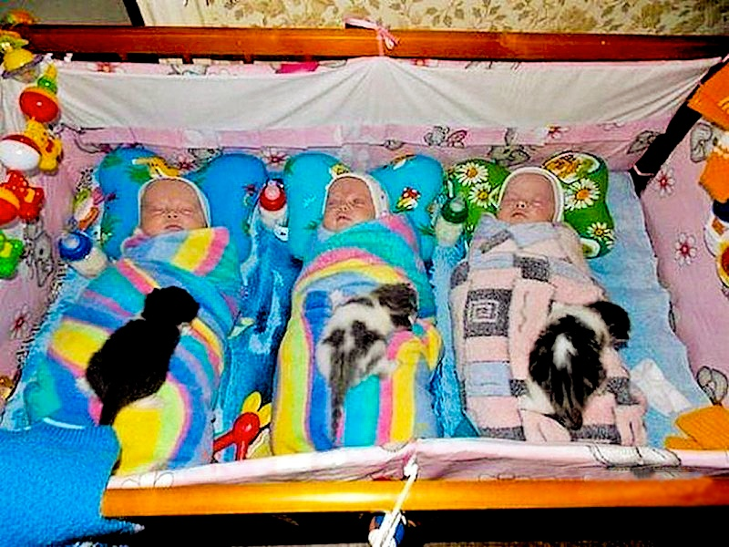 00 Russia. two sets of triplets. babies and kittens. 31.01.13