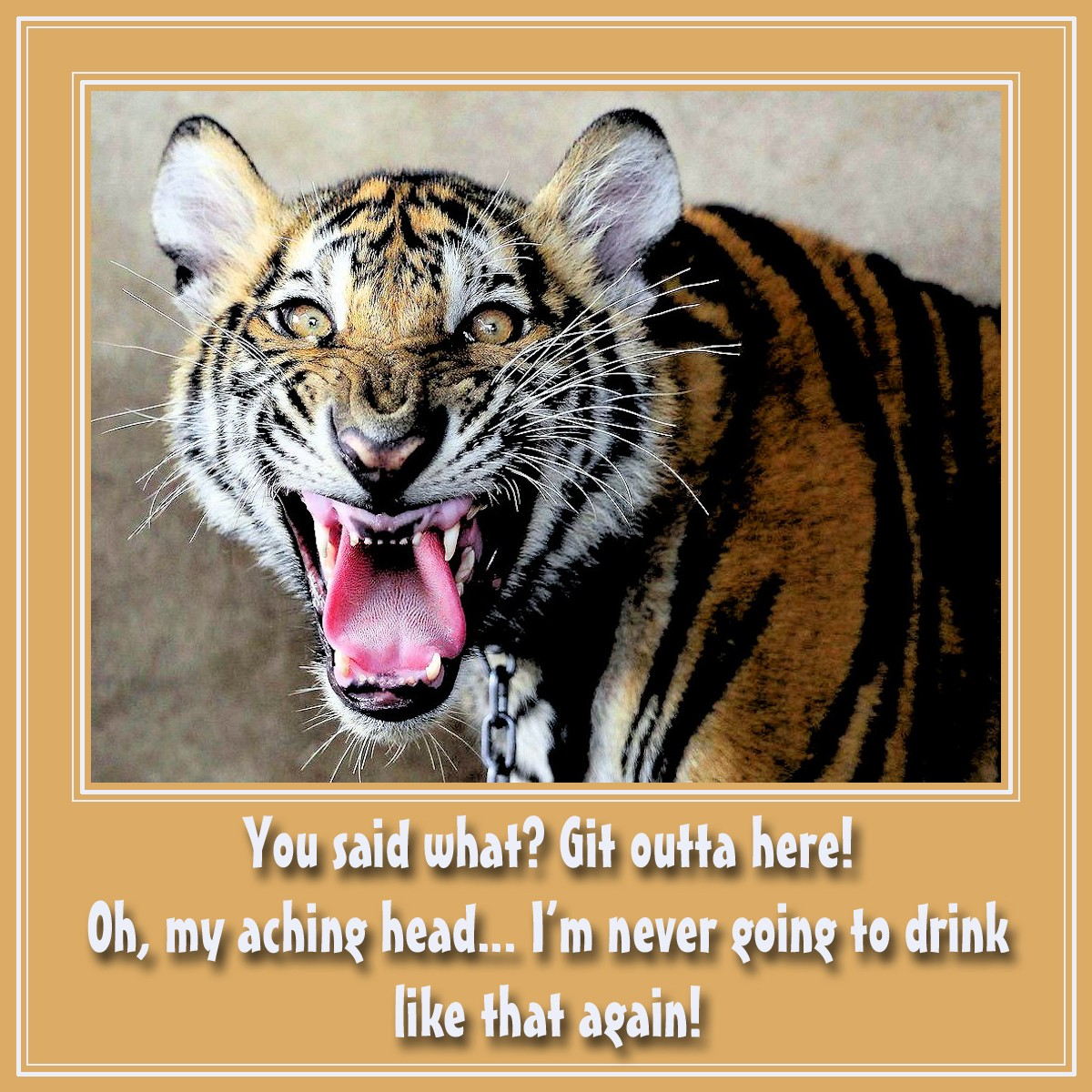 00 Tiger. 01.01.13. Git Outta Here!