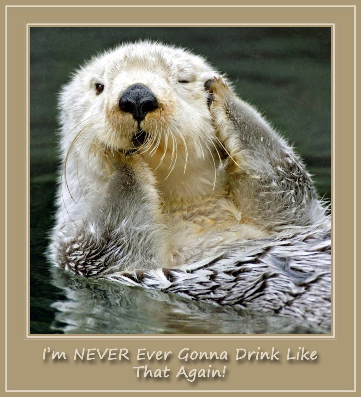 00 Otter. I'm NEVER Gonna Drink Like That Again! 2013