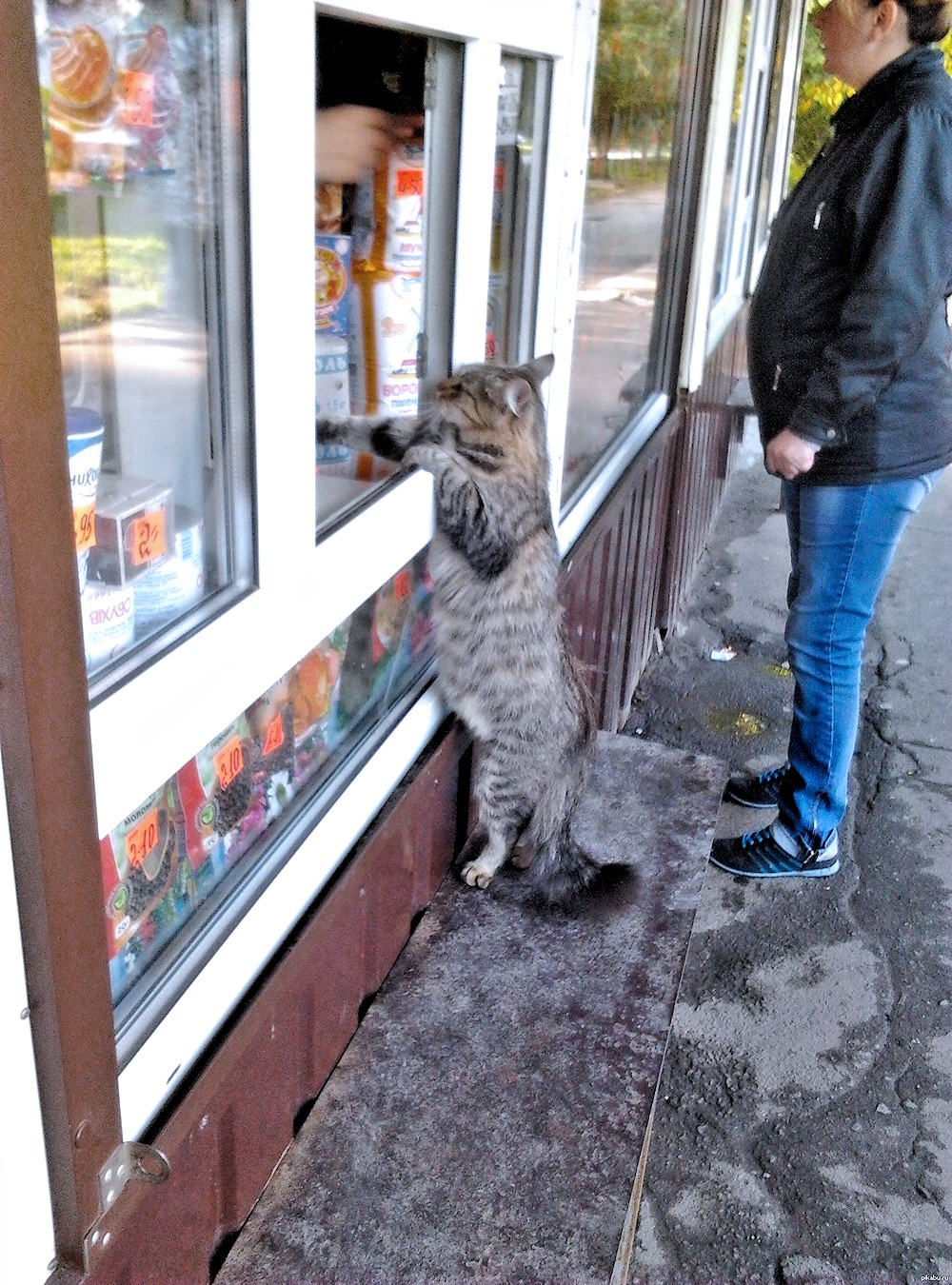 00 Cat in Russia. A Herring and a Carton of Milk, Please... 21.10.13