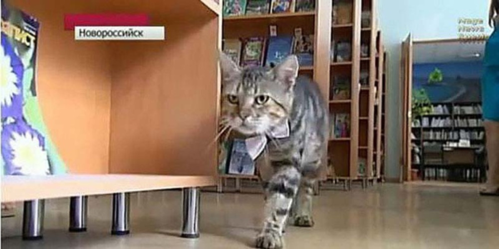 00 Cats 02. Kuzma the Library Cat. 20.02.14