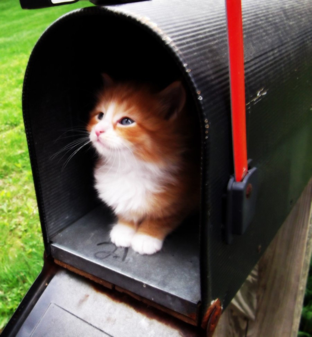 00 Cats 03. Belgian Postal Cat. 20.02.14