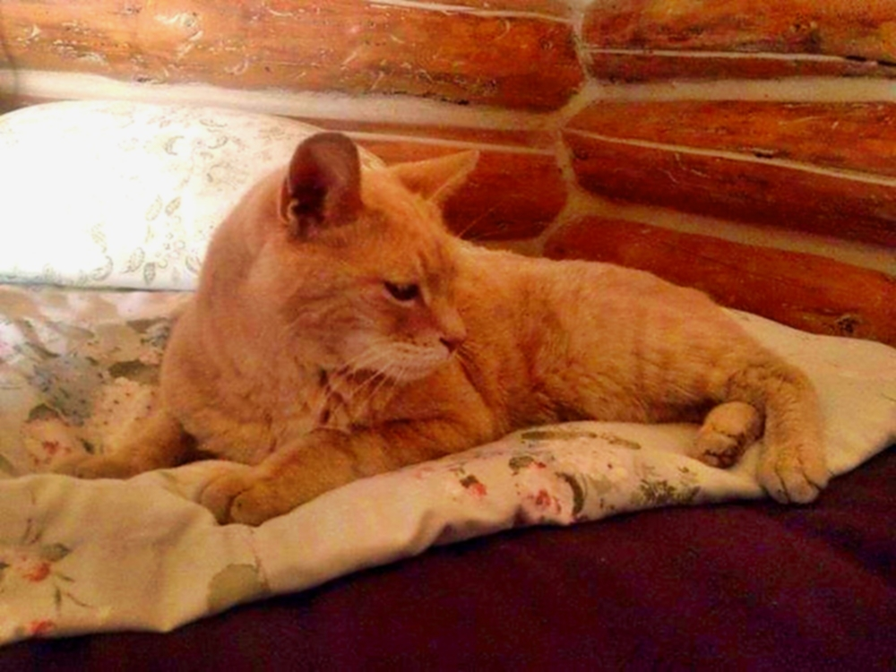 00 Cats 04. Stubbs the Mayor Cat. 20.02.14