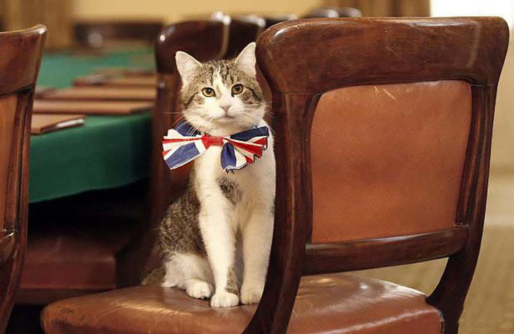 00 Cats 05. Larry  the UK Mouser Cat. 20.02.14