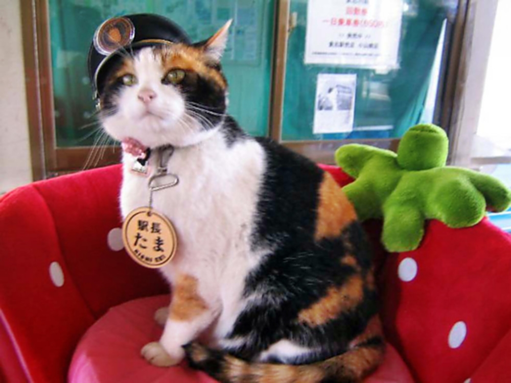00 Cats 06. Tama the Station Master Cat. 20.02.14