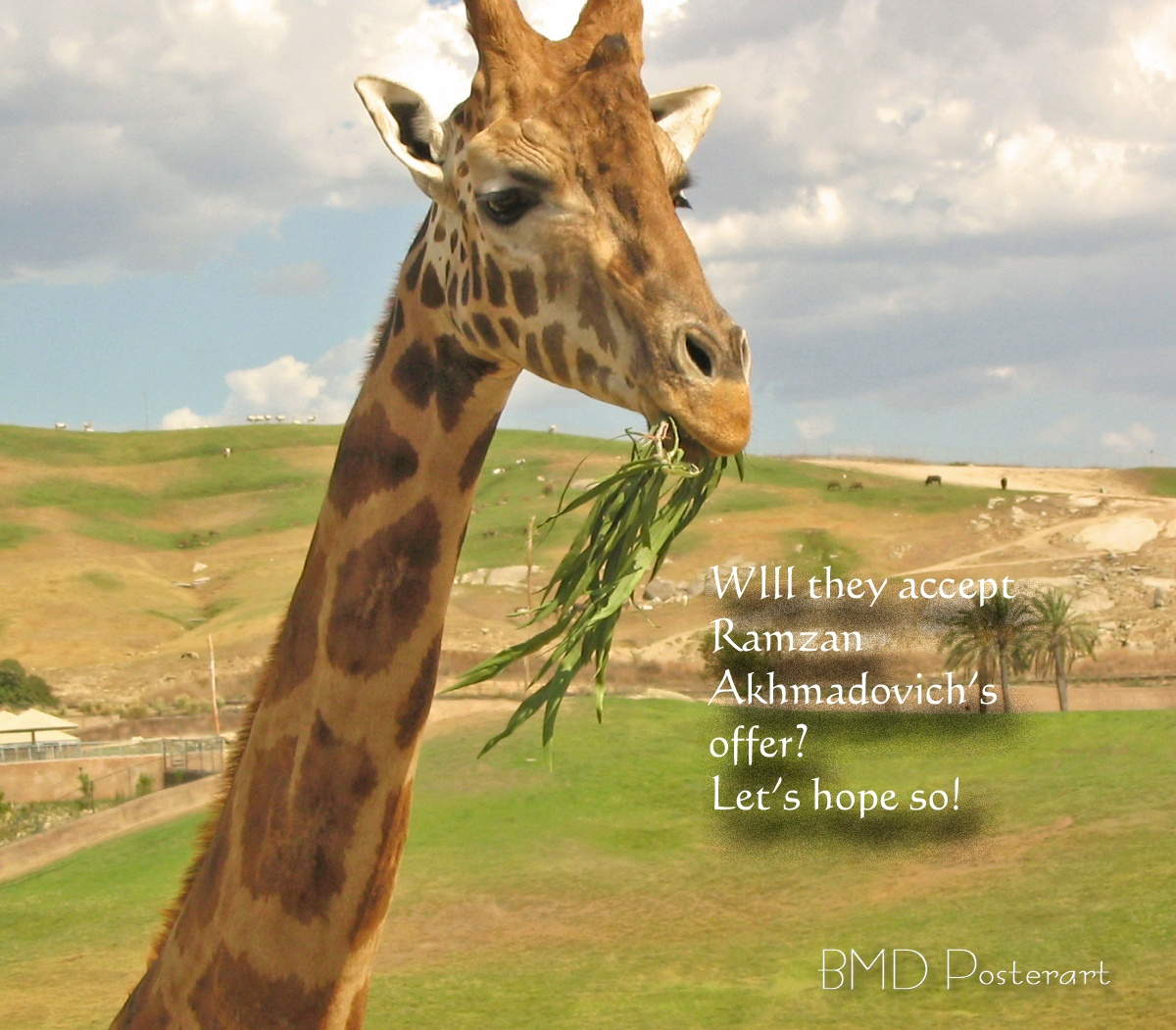 Chechen Leader Offers Shelter to Second Doomed Danish Giraffe