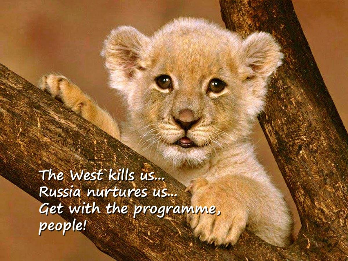 00 Lion cub.26.03.14
