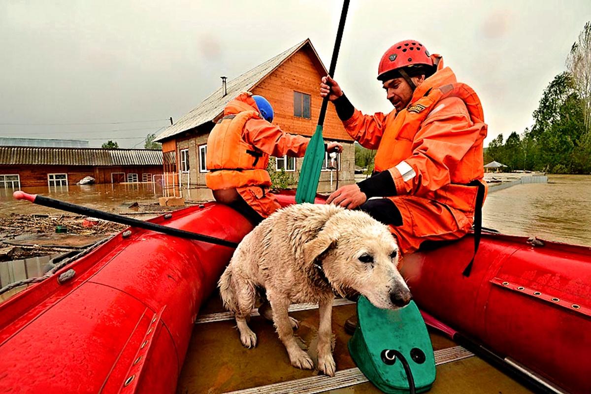 00 altai floods. russia. 02.06.14