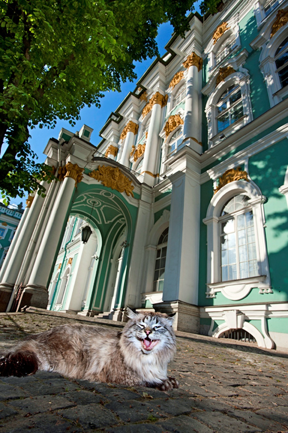 00 hermitage cats. russia. st petersburg. 02. 25.10.14