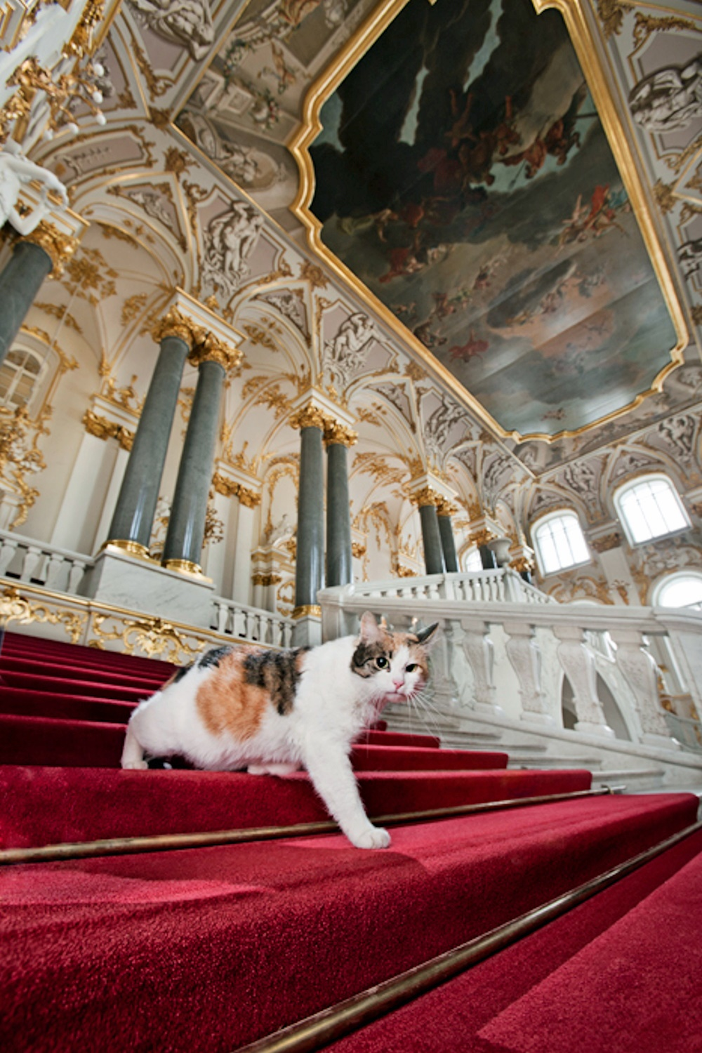 00 hermitage cats. russia. st petersburg. 05. 25.10.14