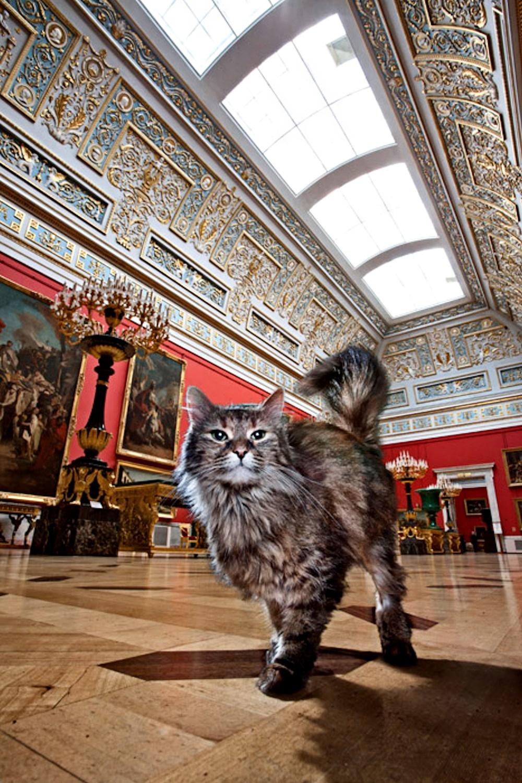 cat in museum