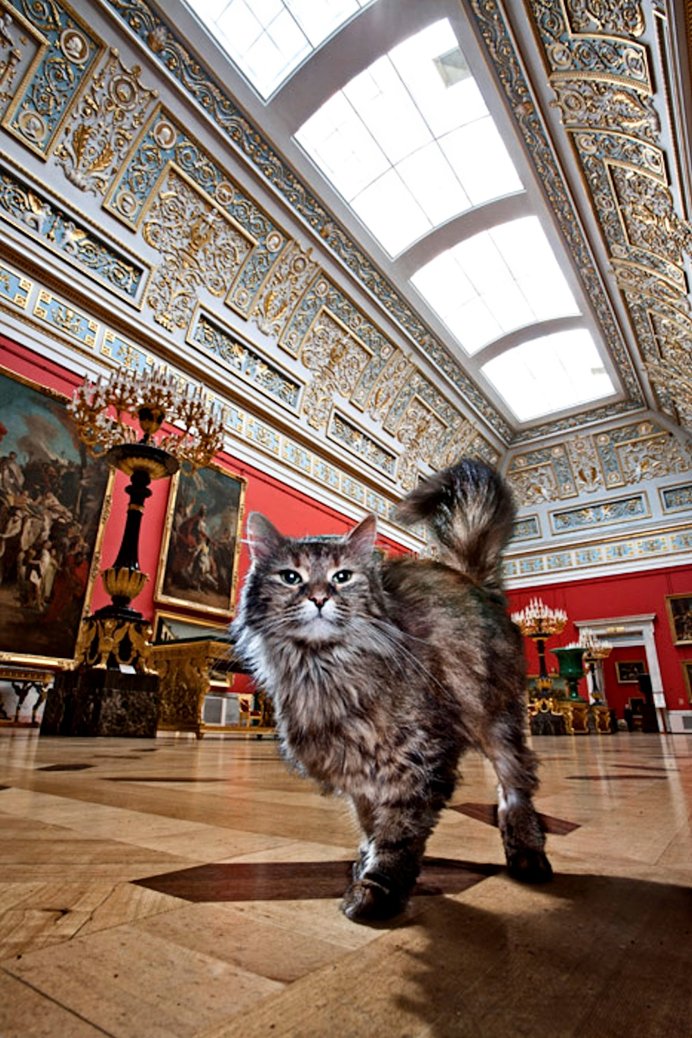 00 hermitage cats. russia. st petersburg. 10. 25.10.14