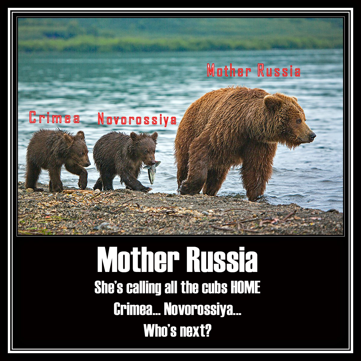 28 october 2014 mother russia is calling all the cubs