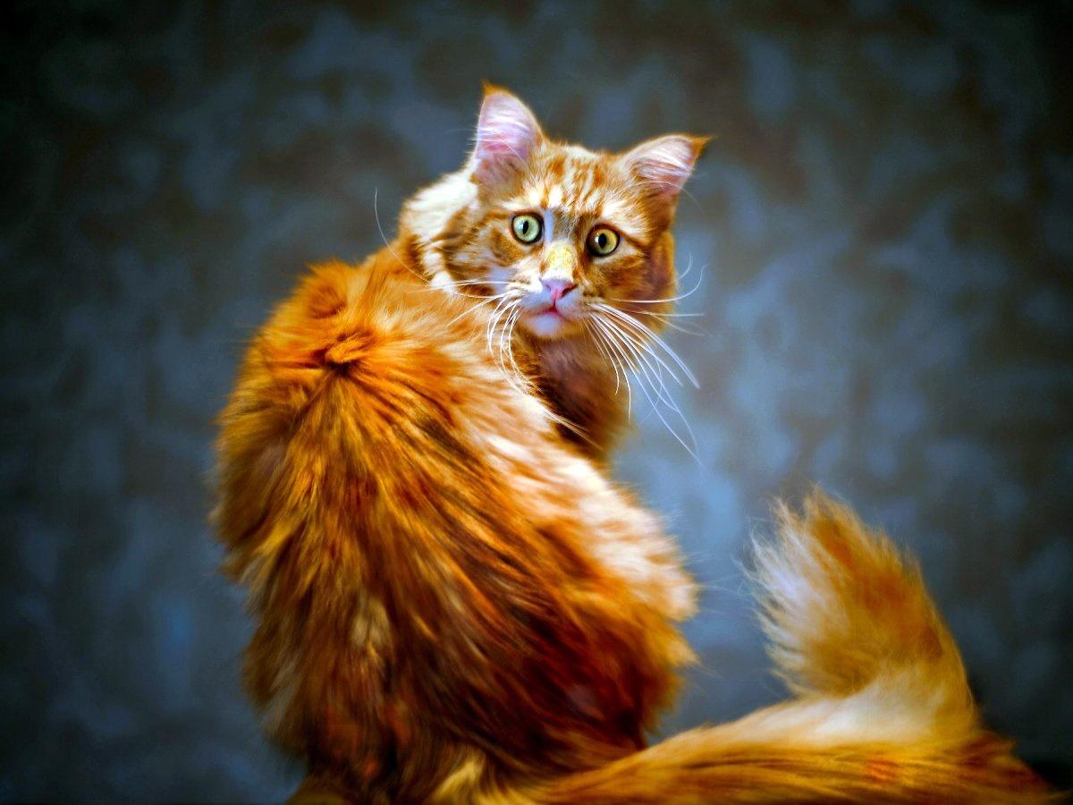 00 ginger cat. 12.12.14