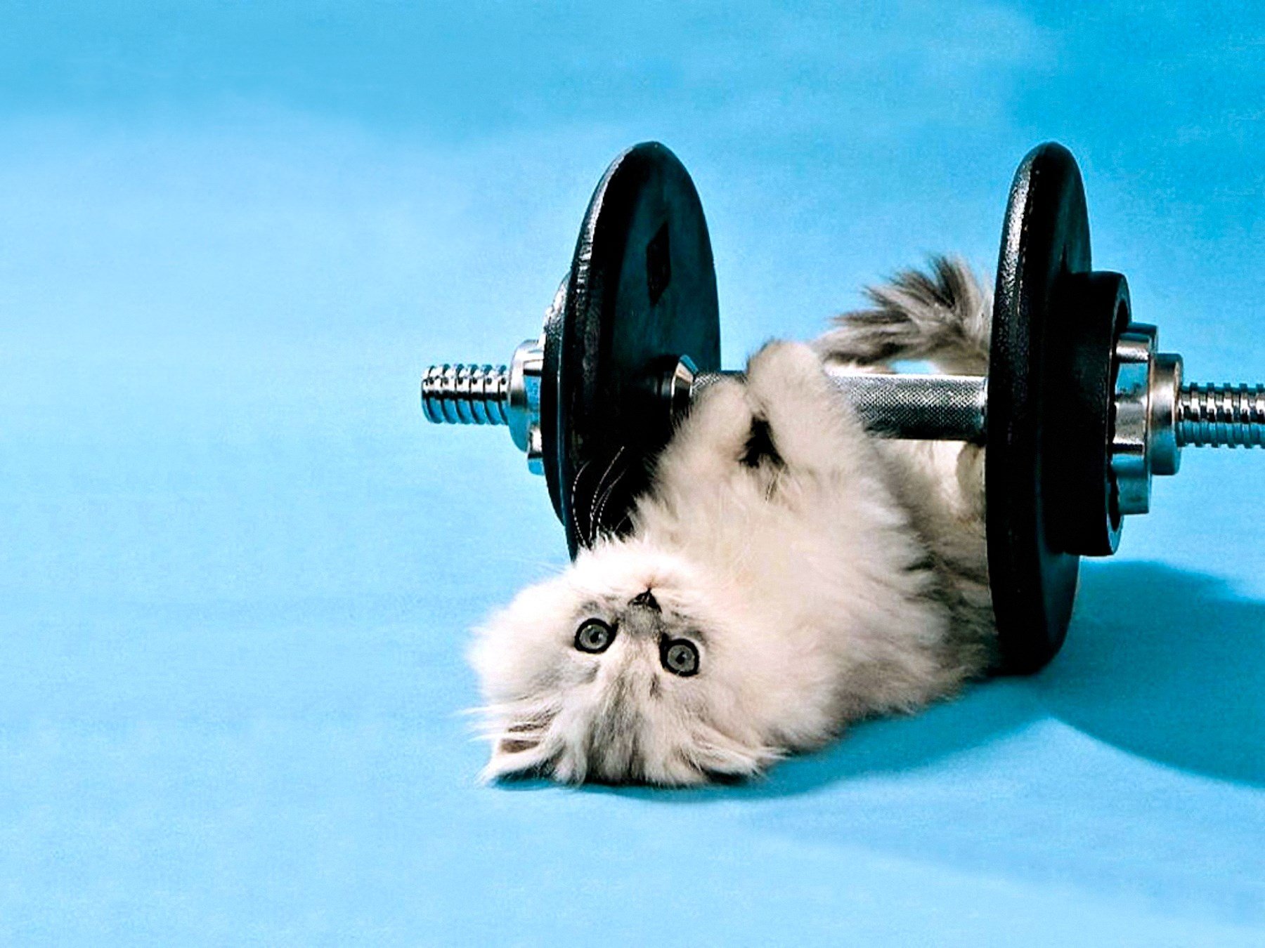 00 cat and weights. 30.03.15